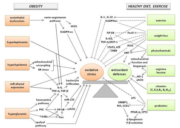 Picture Yuk Simak Info Kondisi GSH pada Obesitas